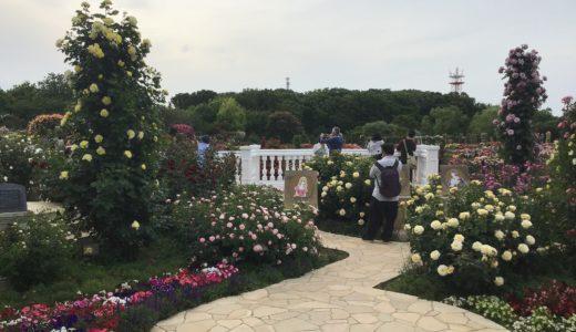 京成バラ園2019年の開花状況は?入園料の割引情報もチェック!
